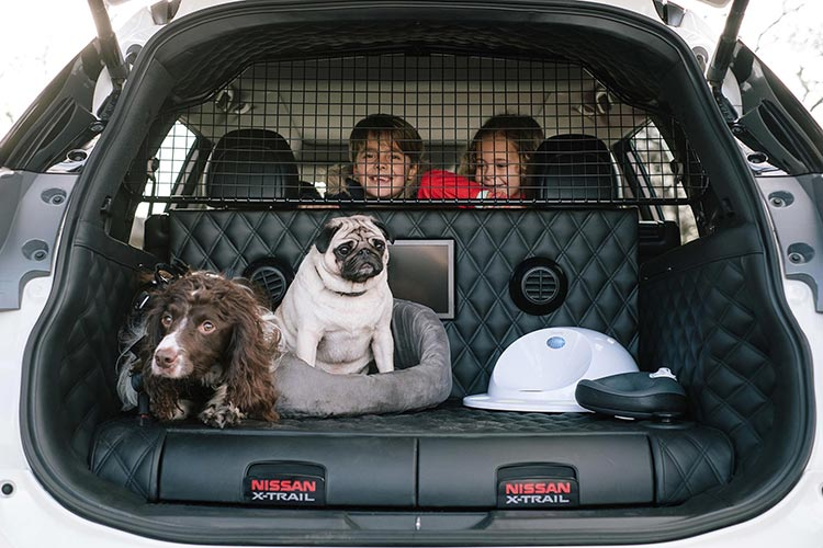 The Pawfect Cars and Accessories for Dog Lovers