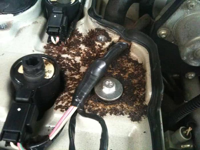 Ants In Car >> How To Get Rid Of Ants In Car An Effective Guide For A